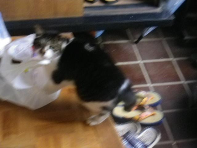 02) カリカリが入っている袋を見つけた ' ステッペンウルフ '.JPG