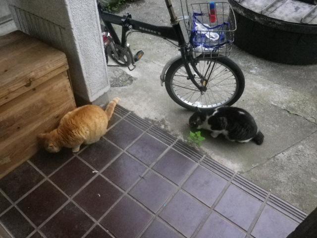 12.05.20早朝の ' ステッペンウルフ  '.JPG